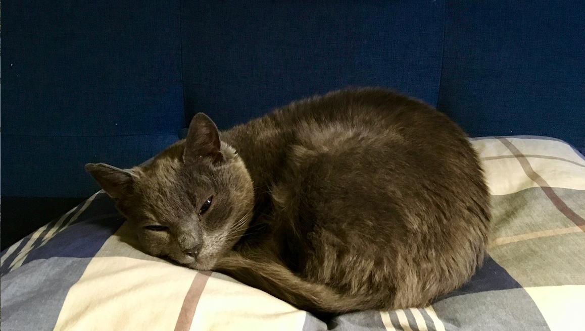 household cat riga