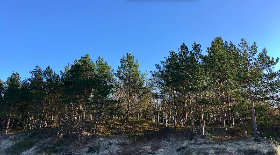 forest bathing latvia