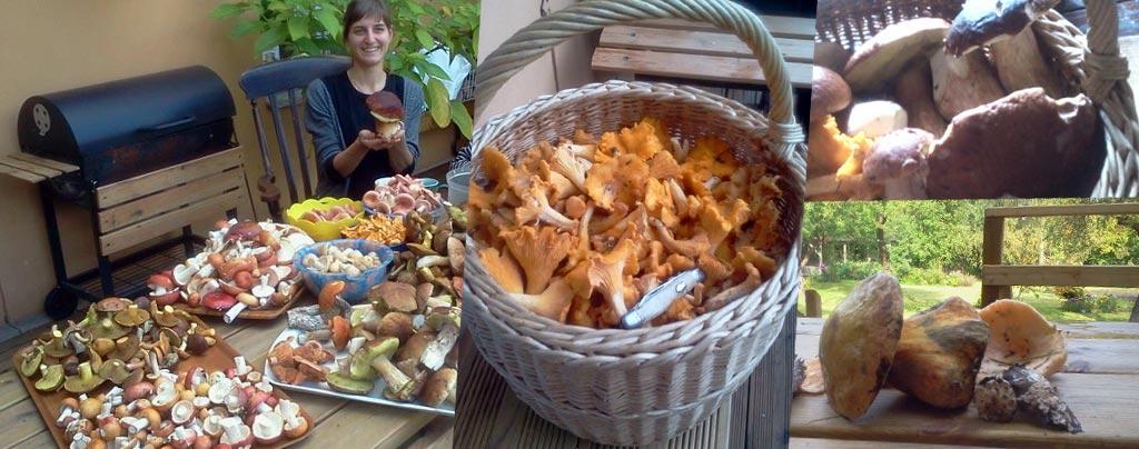 mushroom-haul